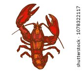 red lobster ink drawing hand... | Shutterstock .eps vector #1078322117