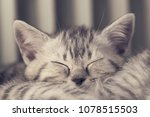 Stock photo portrait of a sleeping tabby kitten 1078515503