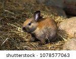 full body of brown domestic... | Shutterstock . vector #1078577063