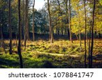 spring in the forest with the...   Shutterstock . vector #1078841747