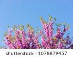 pink blossom tree background | Shutterstock . vector #1078879457