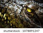 alligator or crocodile concept. ... | Shutterstock . vector #1078891247
