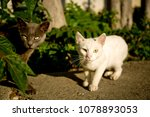 Small photo of Black and white cats look forward
