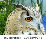 close up of siberian eagle owl  ... | Shutterstock . vector #1078899143