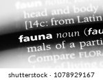 fauna word in a dictionary.... | Shutterstock . vector #1078929167