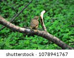 Small photo of A Troglodytes musculus perched on the branch of a tranquil tree