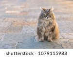 single cat sitting on the... | Shutterstock . vector #1079115983
