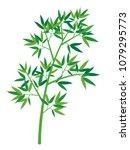vector illustration  bamboo of  ... | Shutterstock .eps vector #1079295773