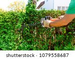 hedge cutting   hedge trimming... | Shutterstock . vector #1079558687