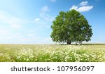 green summer meadow with... | Shutterstock . vector #107956097