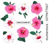 set of summer hibiscus floral...   Shutterstock .eps vector #1079677067