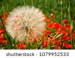 horizontal view of close up of... | Shutterstock . vector #1079952533