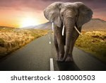 elephant walking on the road at ... | Shutterstock . vector #108000503
