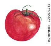 watercolor hand drawn tomato ... | Shutterstock .eps vector #1080071363