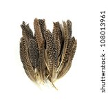 feathers on white background - stock photo
