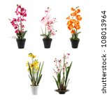 five orchids on pots - stock photo