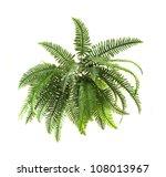 green fern on white background | Shutterstock . vector #108013967