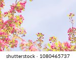 spring blossom with pink tree...   Shutterstock . vector #1080465737