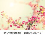 spring blossom with pink tree...   Shutterstock . vector #1080465743