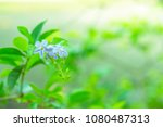 beautiful purple flower on tree ... | Shutterstock . vector #1080487313