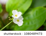 close up white flowers on... | Shutterstock . vector #1080489473