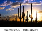 Saguaro national park - stock photo