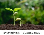young plants growing  from seed ... | Shutterstock . vector #1080695537