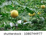 three dimensional cultivation...   Shutterstock . vector #1080744977