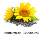 Yellow Sunflowers And Sunflowe...