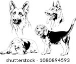Stock vector vector drawings sketches pedigree dogs in the racks drawn in ink by hand objects with no 1080894593