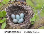 Bird Nest On Tree Branch With...