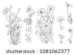 hand drawn poppy flower isolate ... | Shutterstock .eps vector #1081062377