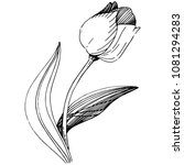 wildflower tulip flower in a... | Shutterstock .eps vector #1081294283