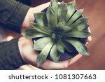 a girld holding a succulent...   Shutterstock . vector #1081307663