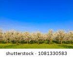 Plantation Of White Flowering...