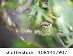 A Small  Hidden  Humming Bird...