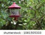 female northern cardinal... | Shutterstock . vector #1081505333