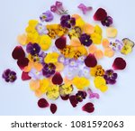 colorful edible flowers on... | Shutterstock . vector #1081592063
