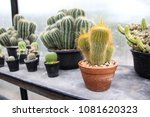 small cactus in a pot | Shutterstock . vector #1081620323