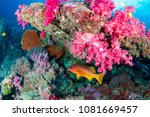 colorful tropical fish on a... | Shutterstock . vector #1081669457