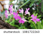 pink and violet orchid flower.... | Shutterstock . vector #1081722263
