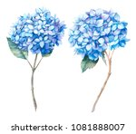 watercolor blue hydrangea set.... | Shutterstock . vector #1081888007