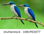 lovely pair of beautiful blue... | Shutterstock . vector #1081902077