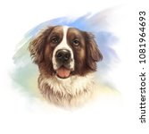 The St. Bernard. Powerful Dog...