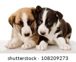 Stock photo  cute puppies lie together isolated on white background 108209273