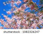 sakura red flowers over the... | Shutterstock . vector #1082326247