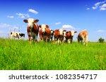 calves on the field | Shutterstock . vector #1082354717