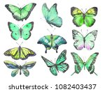 Stock photo drawing of a green butterflies with watercolor 1082403437