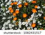 wild flowers meadow | Shutterstock . vector #1082431517