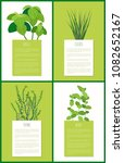 basil chives thyme and mint... | Shutterstock .eps vector #1082652167
